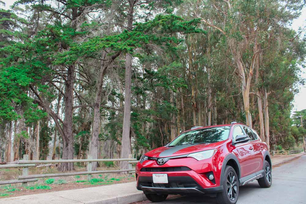 Los Osos Baywood Park is covered with patches of delicious smelling Eucalyptus trees! Roll the windows down and breathe deep. This 2018 Toyota RAV4 Adventure AWD was the perfect car for a Central Coast road trip.