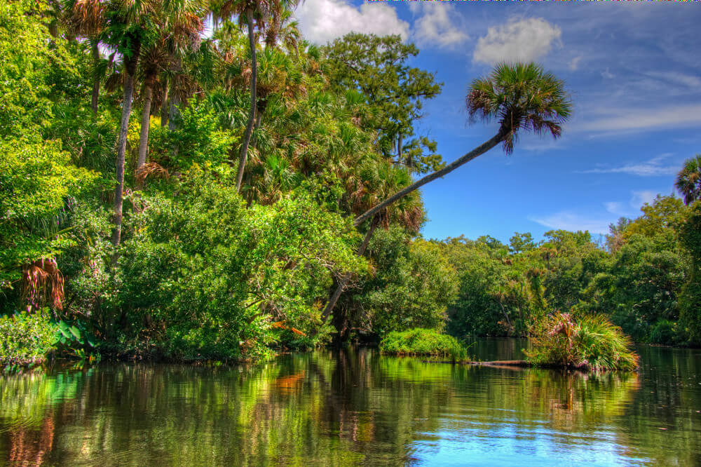 Kayak, paddle board, swim, make dolphin friends, admire majestic manatees, and bird watch in one of Daytona Beach's many natural preserves and parks.