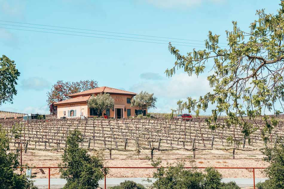 Red Soles Winery and grape vines in Paso Robles, California.