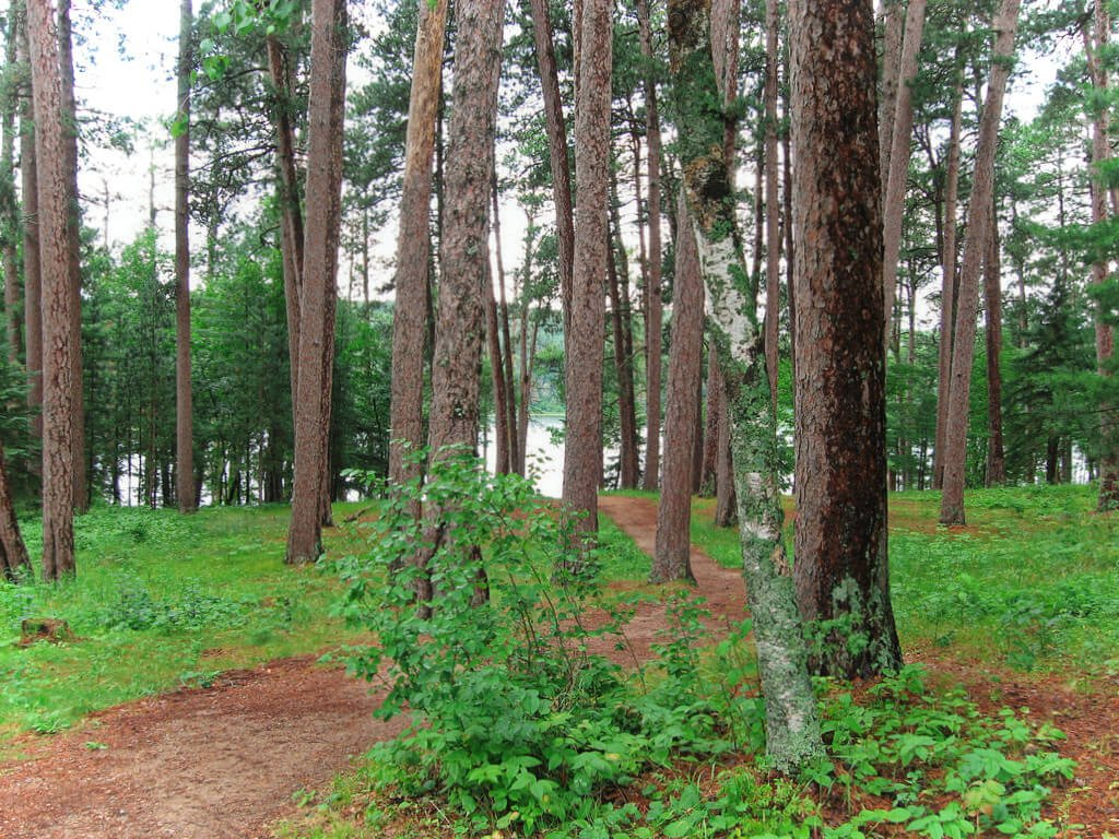 Itasca State Park is Minnesota's oldest park and home to the headwaters of the Mississippi River. It's an awesome place to go in Minnesota for outdoor adventure!