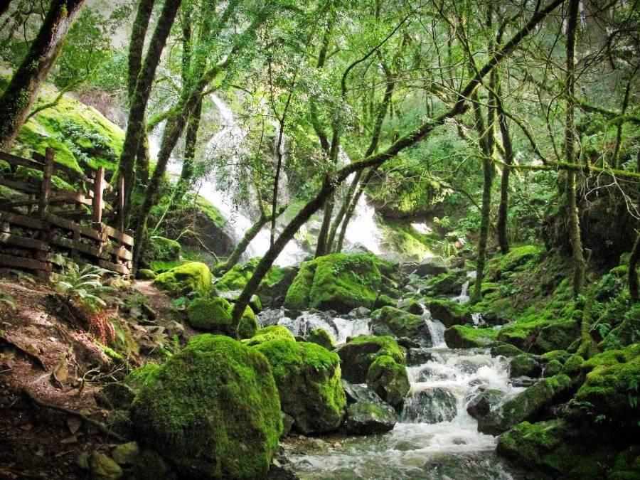 Cataract Falls Hike in Marin California