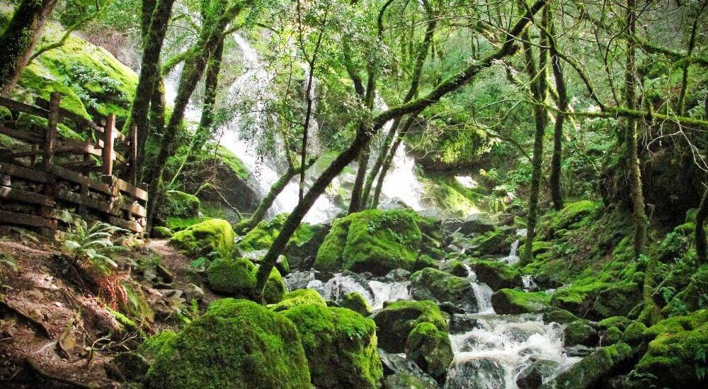 Our disastrous hike of beautiful Cataract Falls in Marin, California.