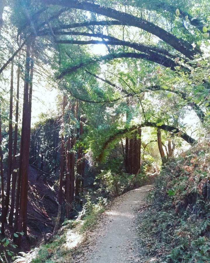 Redwood Regional Park in Oakland