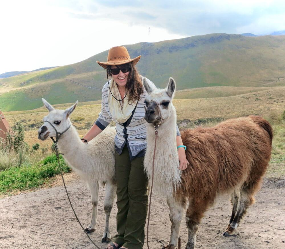 Llamas in Quito, Ecuador