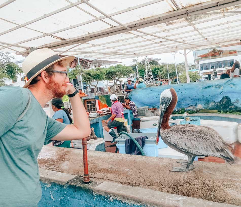 Pelican at the Puerto Ayora fish market in Santa Cruz.