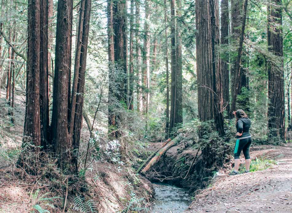 Hiking in Oakland Redwood Regional Park is one of my favorite things to do in Oakland! Did you know there are stunning, towering redwood groves just a few minutes away from downtown Oakland?