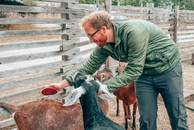 Jeremy instantly bonded with the goats. I had a traumatic childhood experience with a very mean goat named Daisy, so I did not.