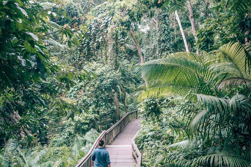 The Monkey Forest in Ubud, Bali