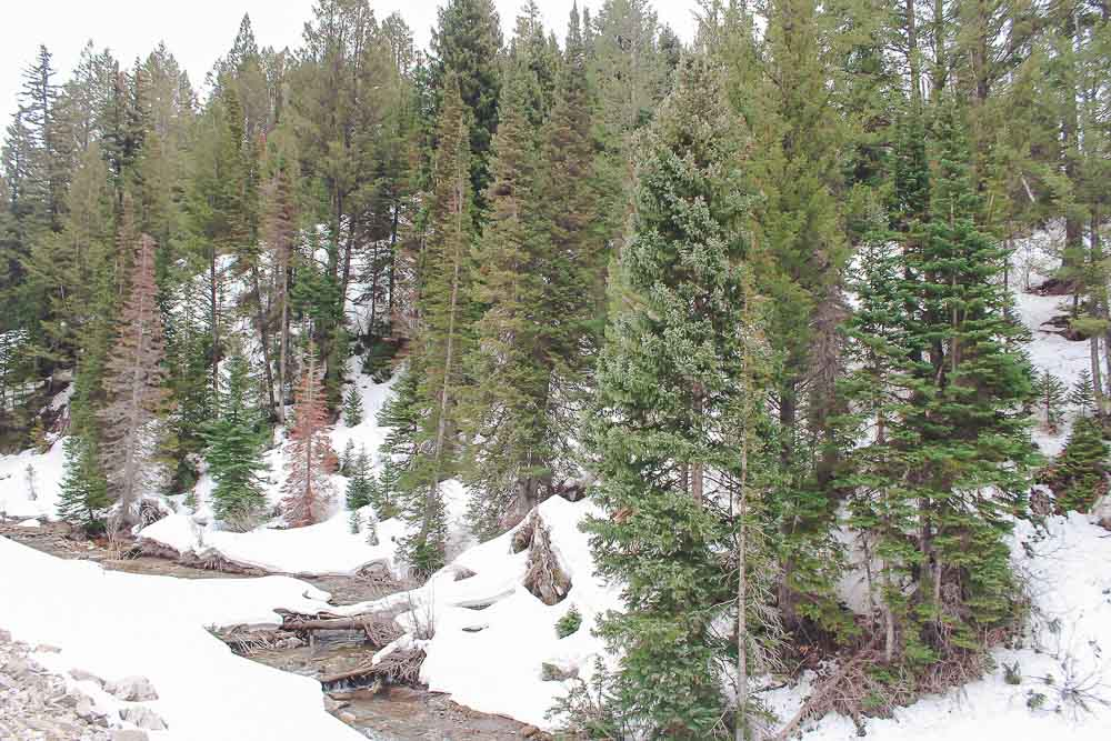 Snowy stream and trees in the mountains of Salt Lake City, Utah.