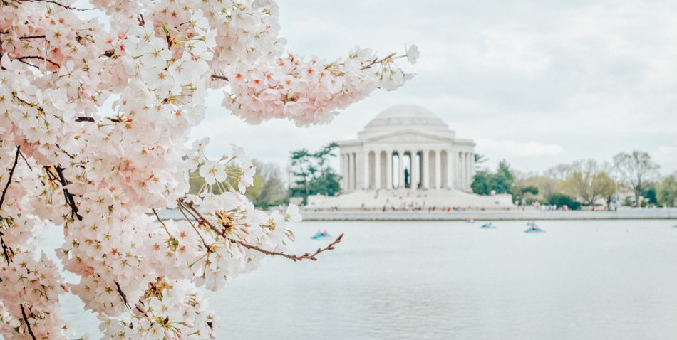 The Jefferson Memorial at the Tidal Basin in Washington DC during cherry blossom season.