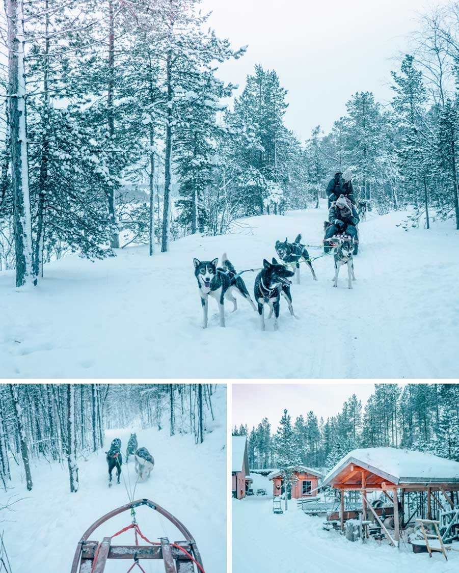 Happy dogs out on a run in the snow in Alta, Norway!