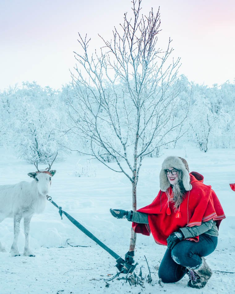 Feeding a reindeer in Finnmark, in Norway's Arctic Tundra, with a Sami homestay.