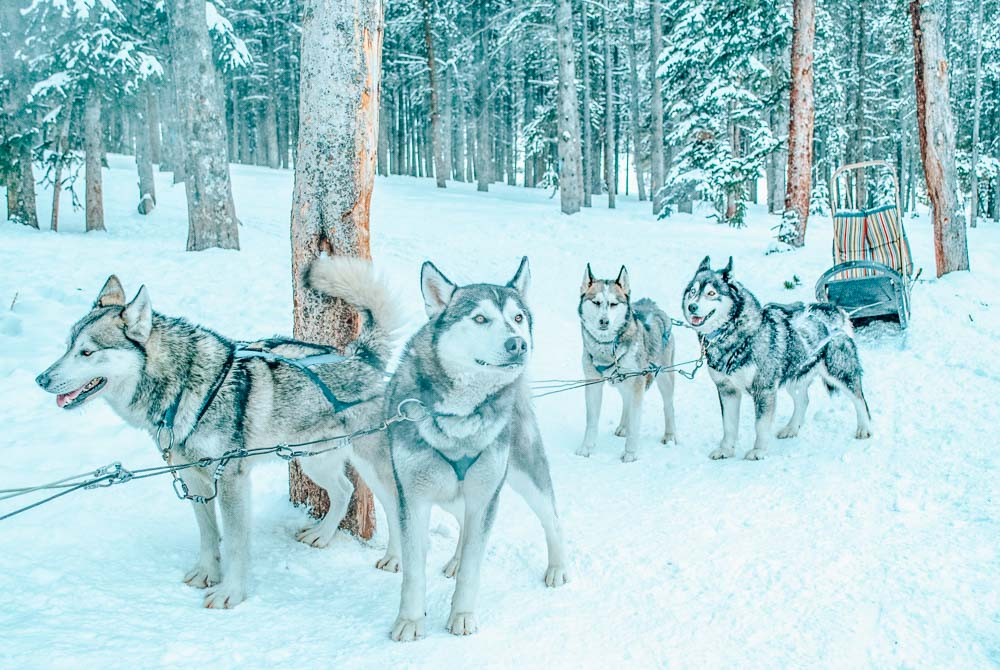 Breckenridge, Colorado is a winter wonderland town complete with winter sports, dog sledding, and sleigh rides!