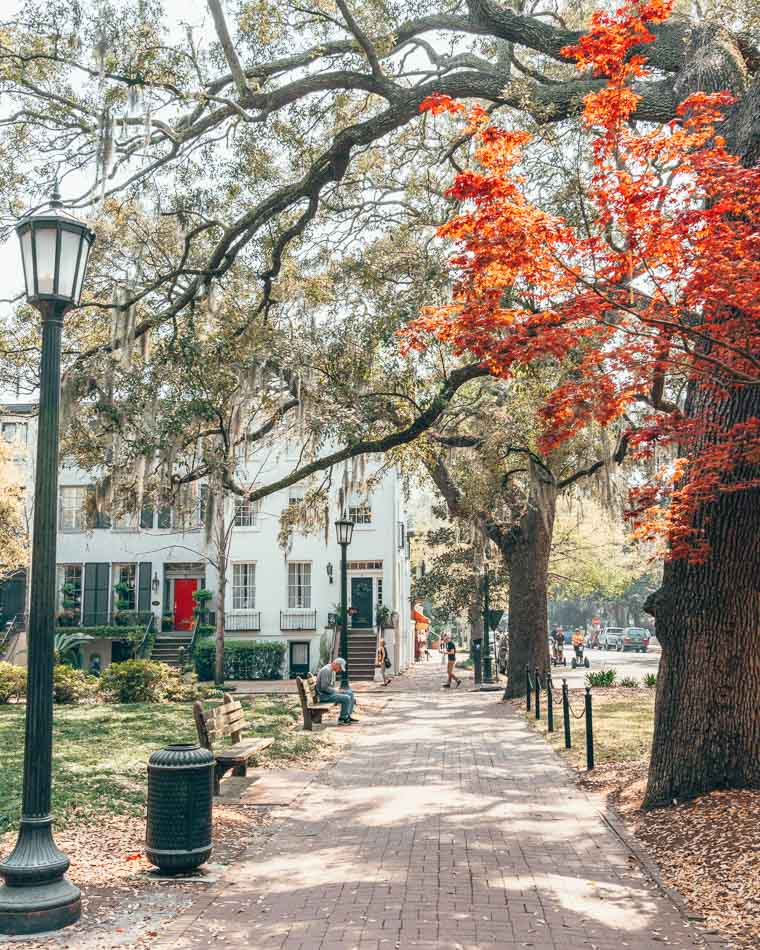 Shady square with a red tree and a lamppost in Savannah, Georgia
