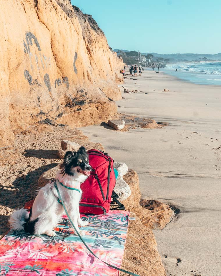 Dog at the beach on a pink travel towel next to a red backpack.