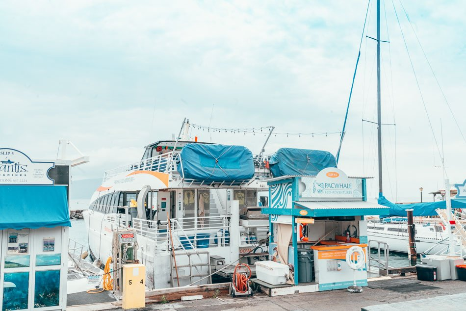 Pacific Whale Foundation boat at the doc in Lahaina, Maui, Hawaii.