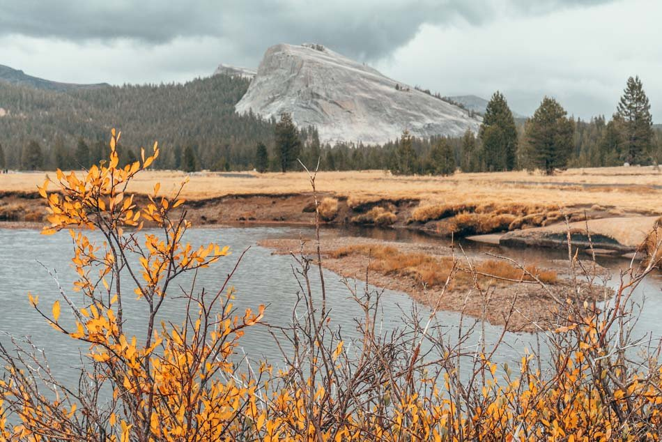 Yosemite National Park and wildflowers in the fall.