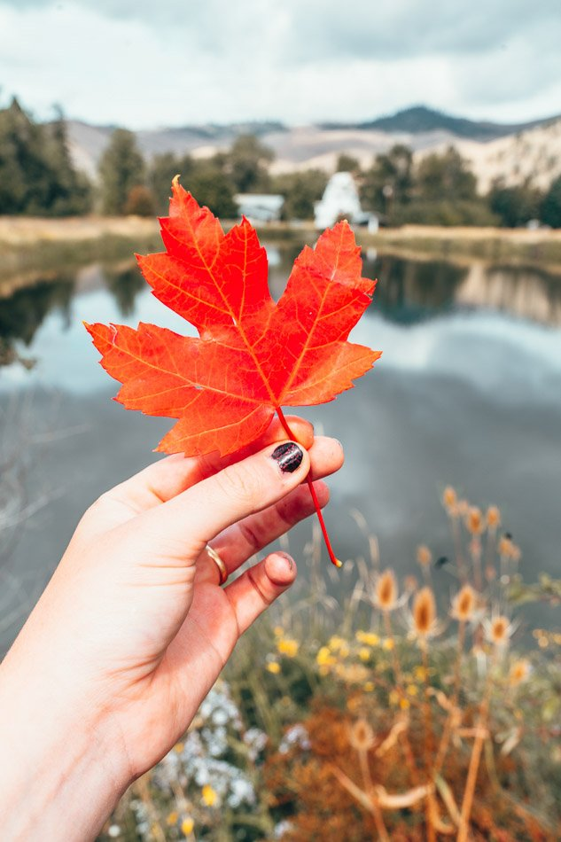 Autumn leaf in Montana in front of a lake.