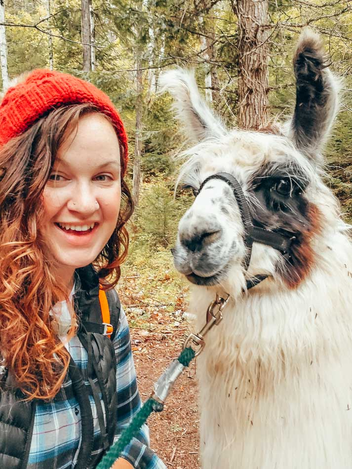 Llama trekking with Boxcar the llama in Big Fork, Montana!