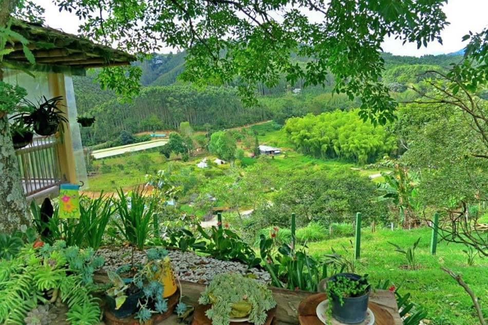 View of the valley and more Colombia coffee farms from Finca el Ocaso in Salento, Colombia.