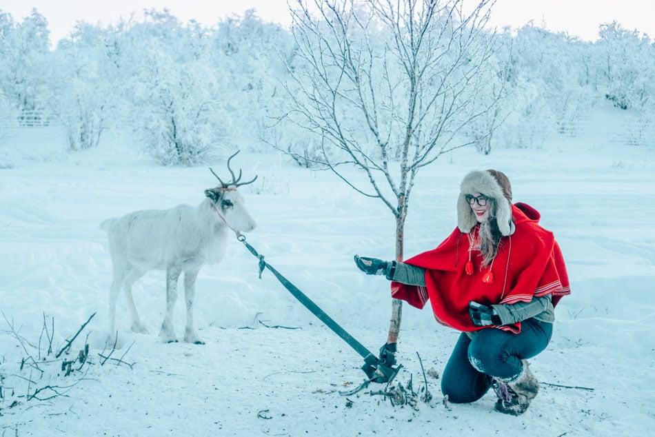 Befriending a reindeer in the Norwegian Arctic Tundra.