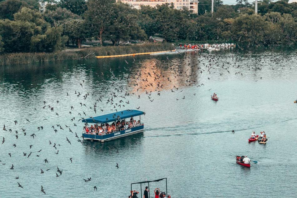 The Austin Bats flying across Lady Bird Lake in Austin, Texas.