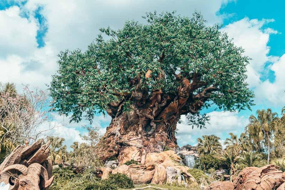 The Tree of Life in Animal Kingdom, Walt Disney World Resort, Orlando, Florida.