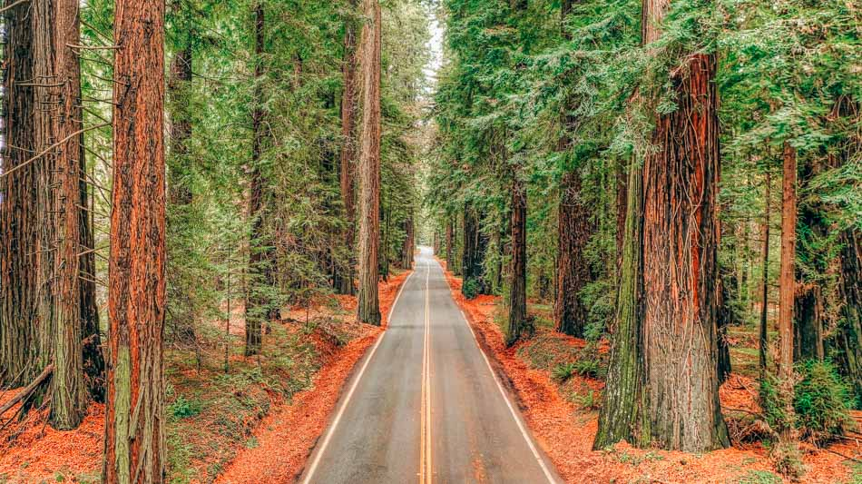 Avenue of the Giants on Highway 101 California