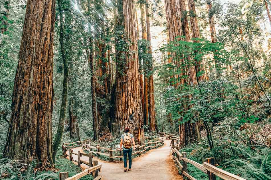 Muir Woods North of San Francisco California  on a Pacific Coast Highway Road Trip