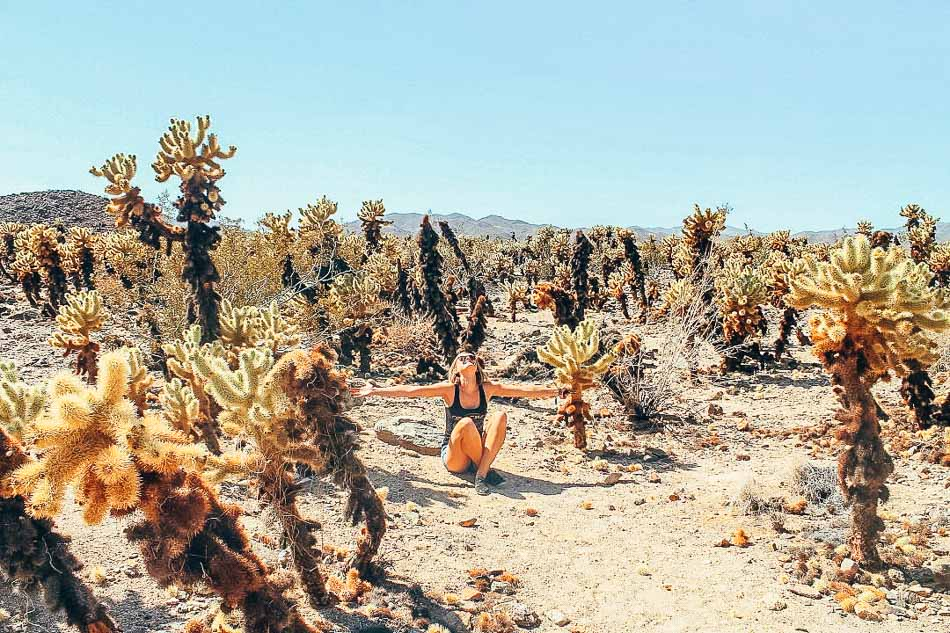 Today's contributing author, Mimi, soaking up the sun in Joshua Tree National Park, surrounded by Cholla Cacti.