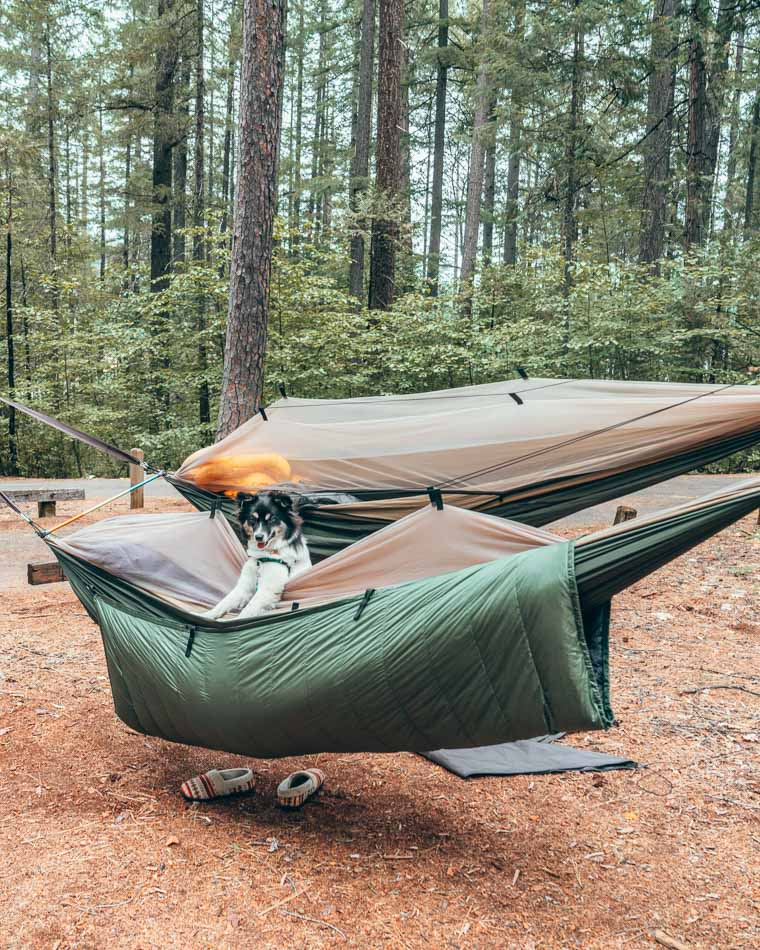 Puppy in a hammock with underquilt at a campsite in Northern California.