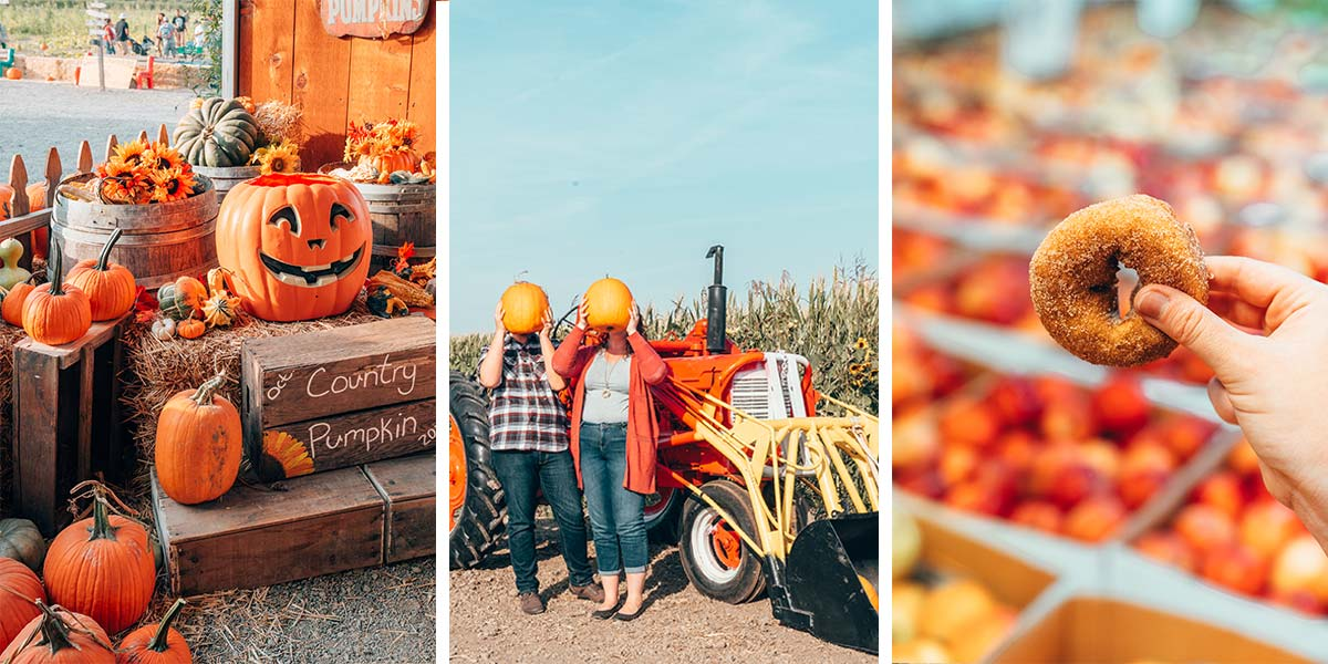 The ultimate guide to fall in california: fall foliage, pumpkin picking, apple orchards, grape stomping, and where to go for the best fall activities in California!