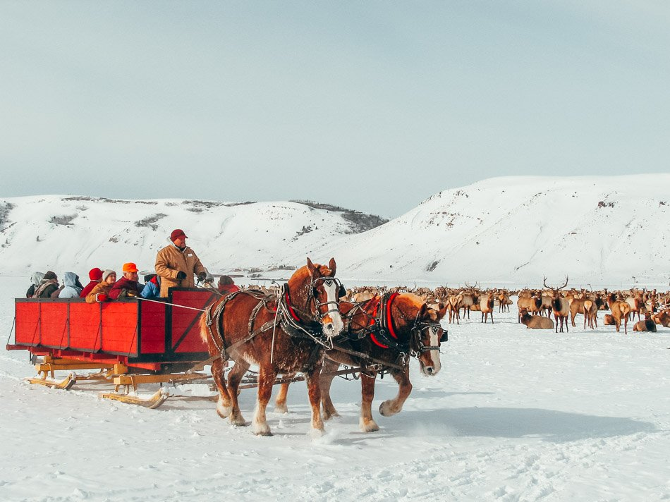 Horse-drawn sleigh ride through the Elk Refuge in Jackson Hole, Wyoming, one of the best things to do in Jackson Hole in the winter!