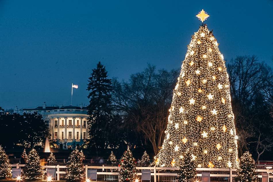 The Whitehouse Christmas tree in Washington DC.
