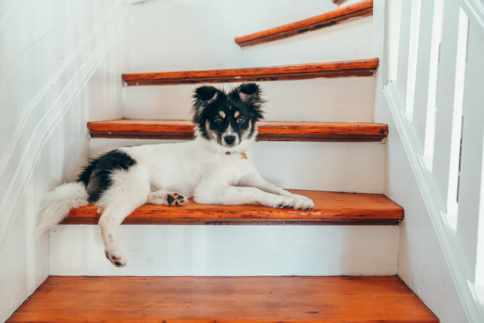 Black and white fluffy puppy lounging on a set of stairs.