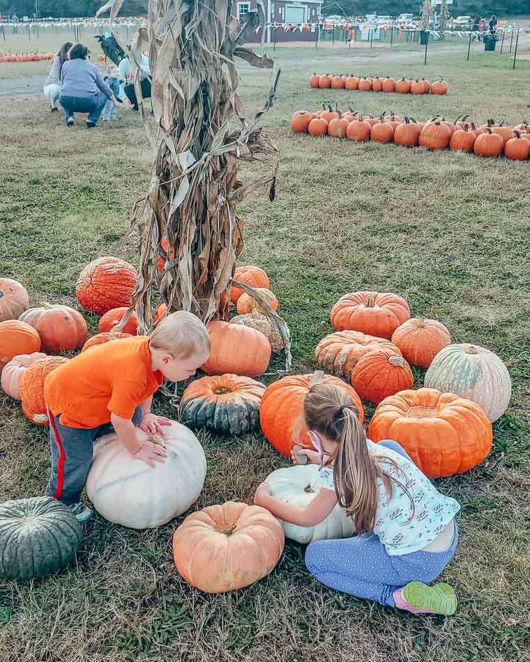 Two small children at a pumpkin patch.