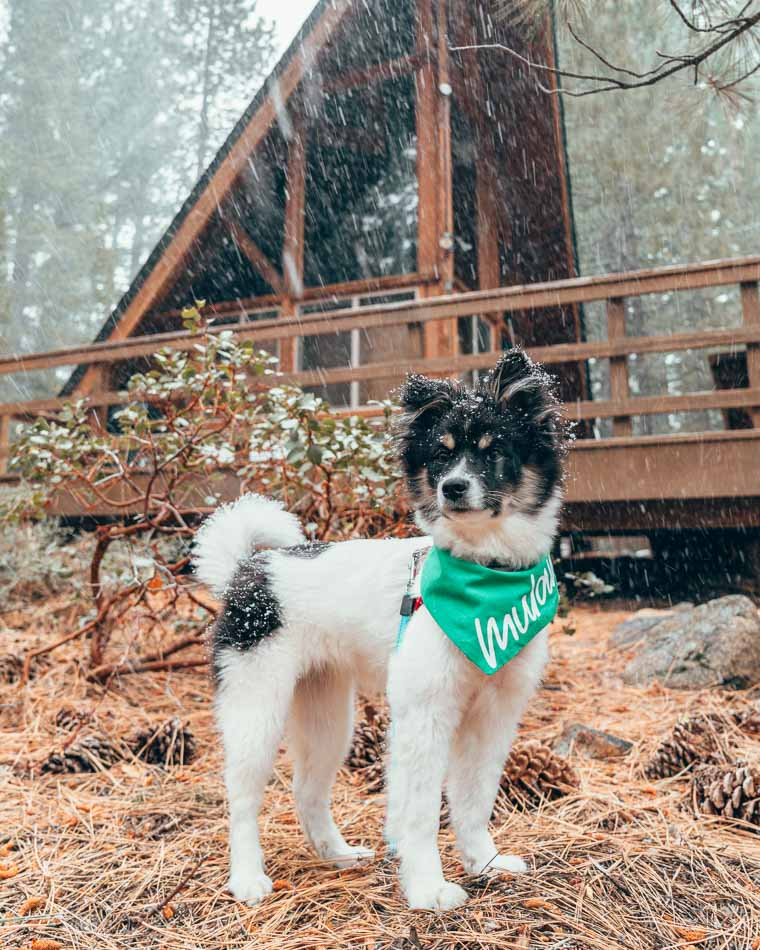 Black and white puppy in front of a snowy cabin in Lake Tahoe, California.