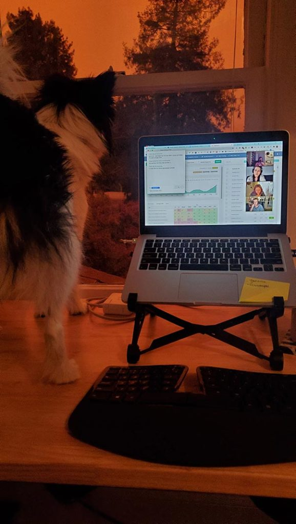 Computer and dog on a desk overlooking a window, bathed in orange light.