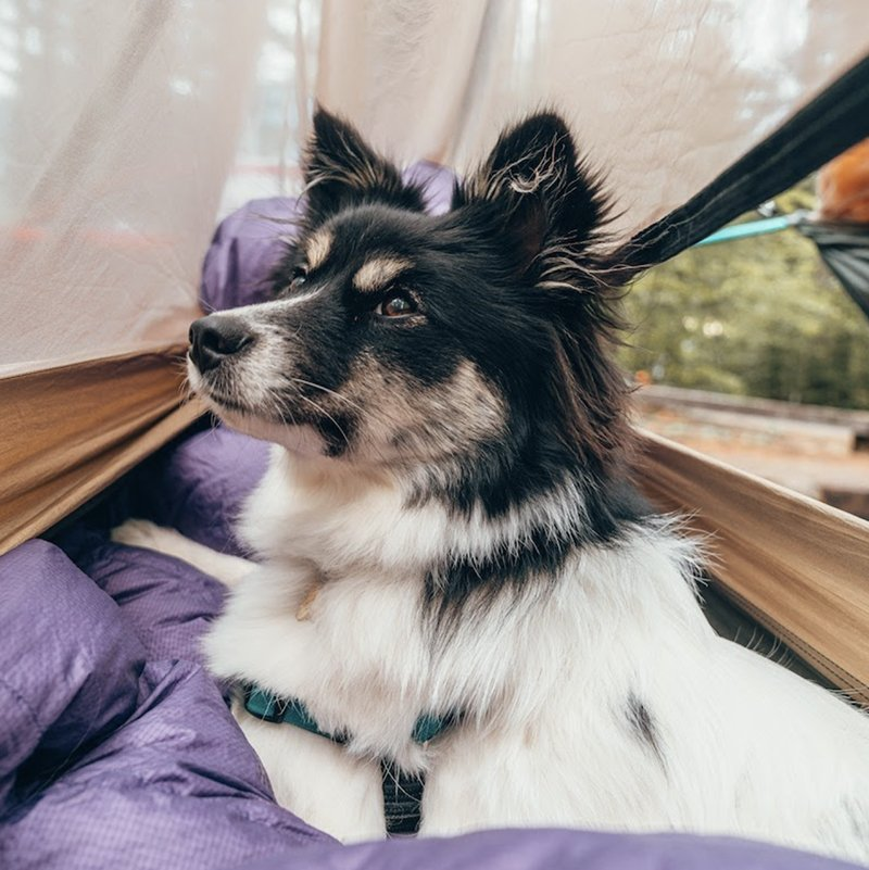 Mulan the dog swaddled in a hammock while camping.