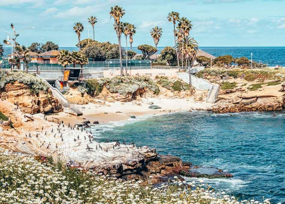 Coastal flowers, palm trees, and bright blue water at La Jolla Cove near San Diego, Californi