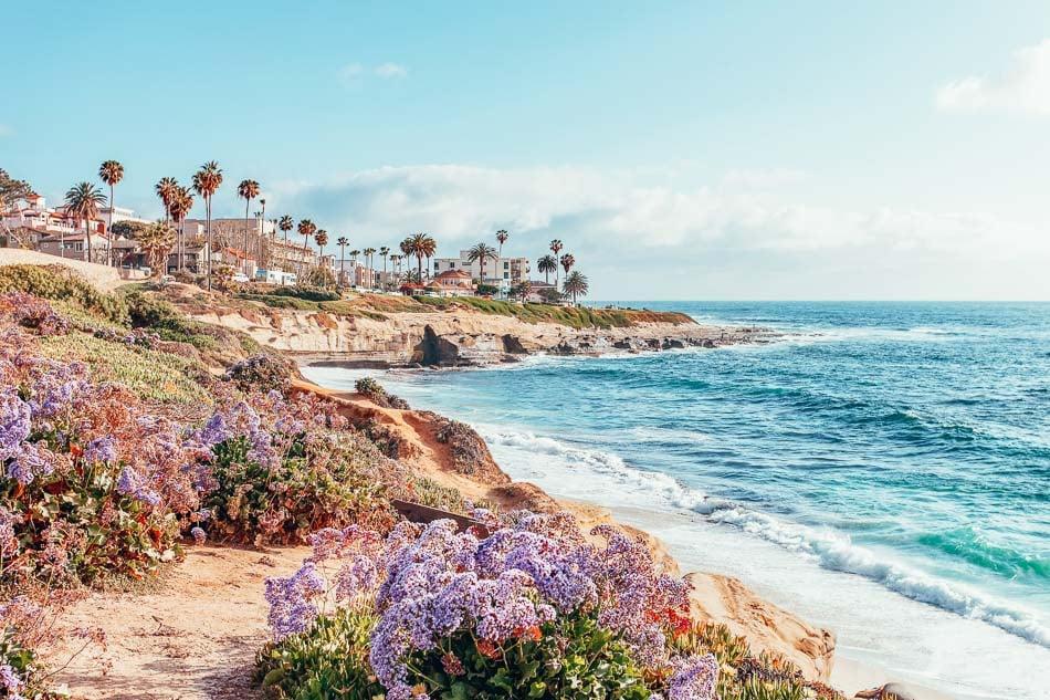 Coastal flowers and rocky outcrop on the beach in La Jolla, California near San Diego
