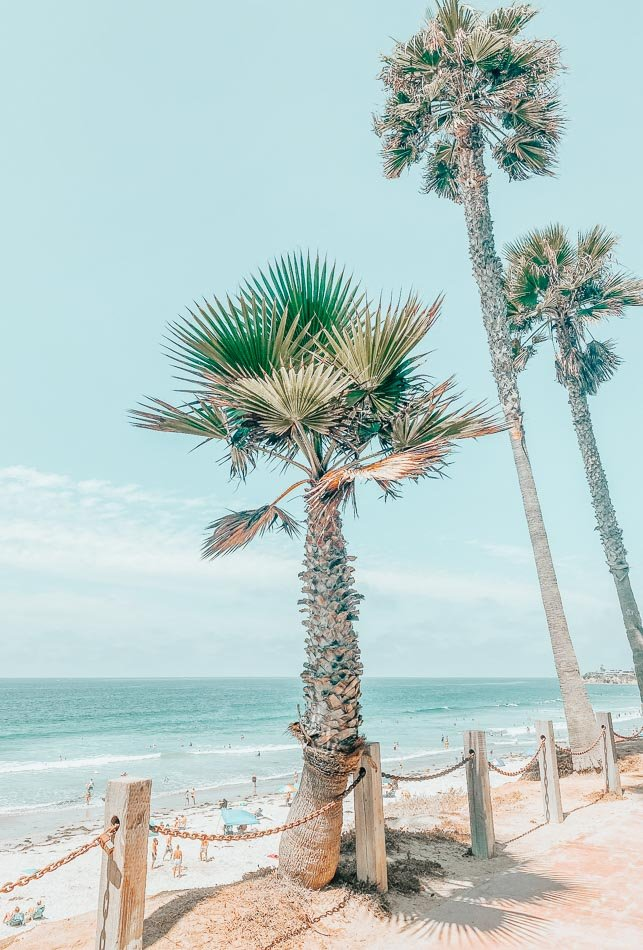 Palm trees and ocean view at Mission Beach in San Diego, CA.
