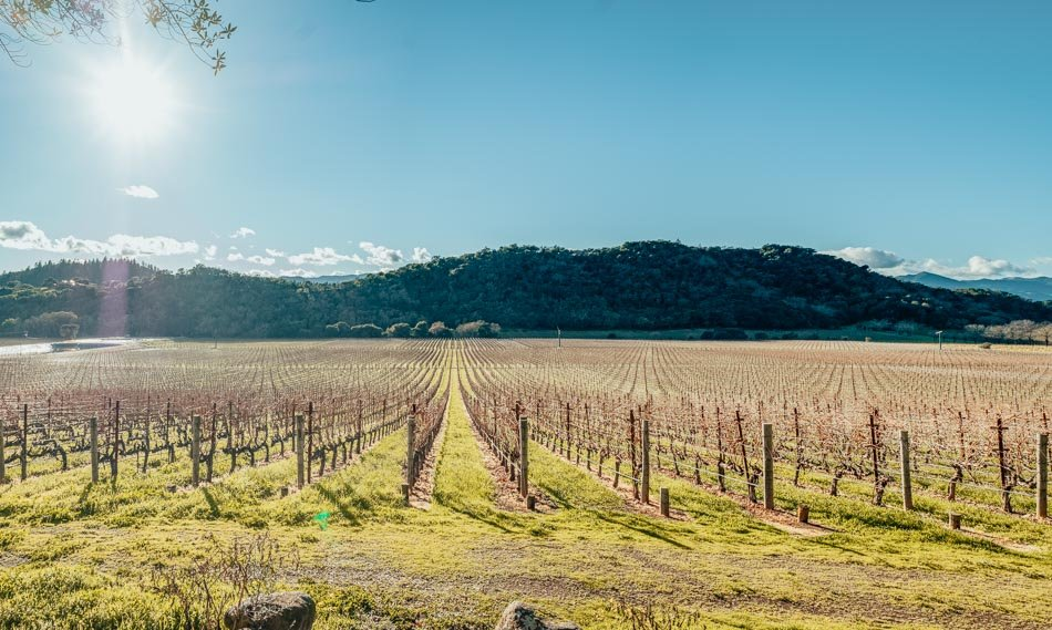 A giant vineyard in Napa on a bright sunny day