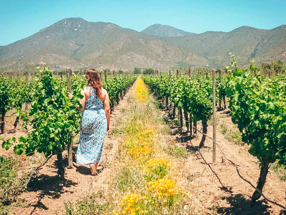 Lia wearing a long blue printed maxi dress in a vineyard studded with yellow spring flowers, mountain in the background.