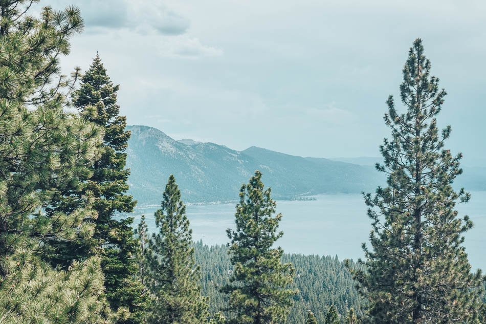 Green pine trees with view of the lake in Lake Tahoe, Nevada.
