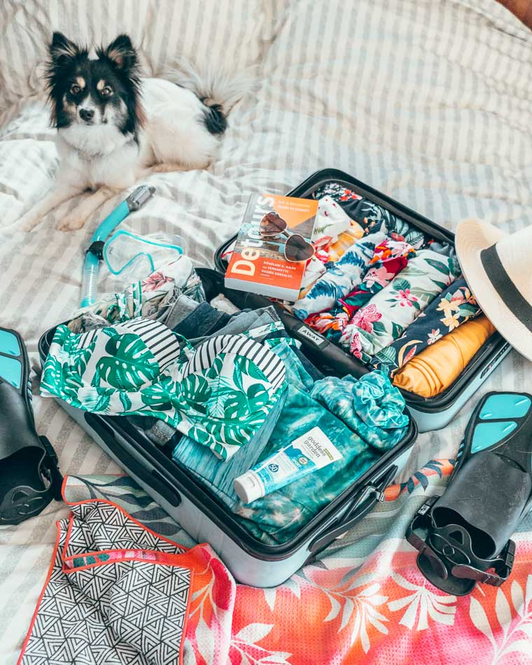 Suitcase packed with a bikini, snorkel gear, and sunscren, with a black and white dog in the background.h