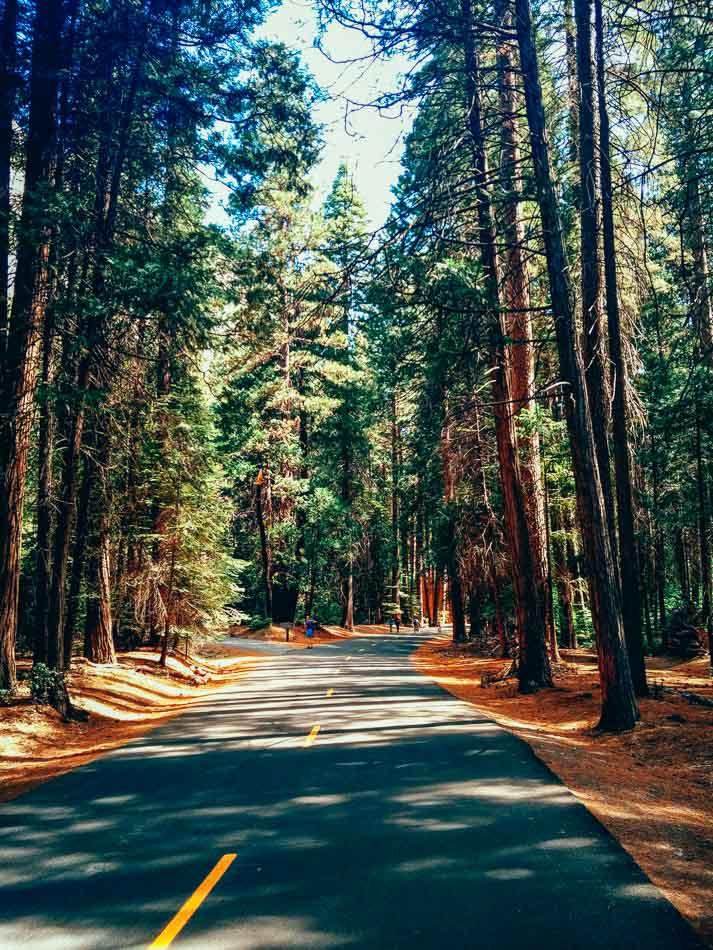 Grey concrete road in between redwood trees in Yosemite Valley, CA