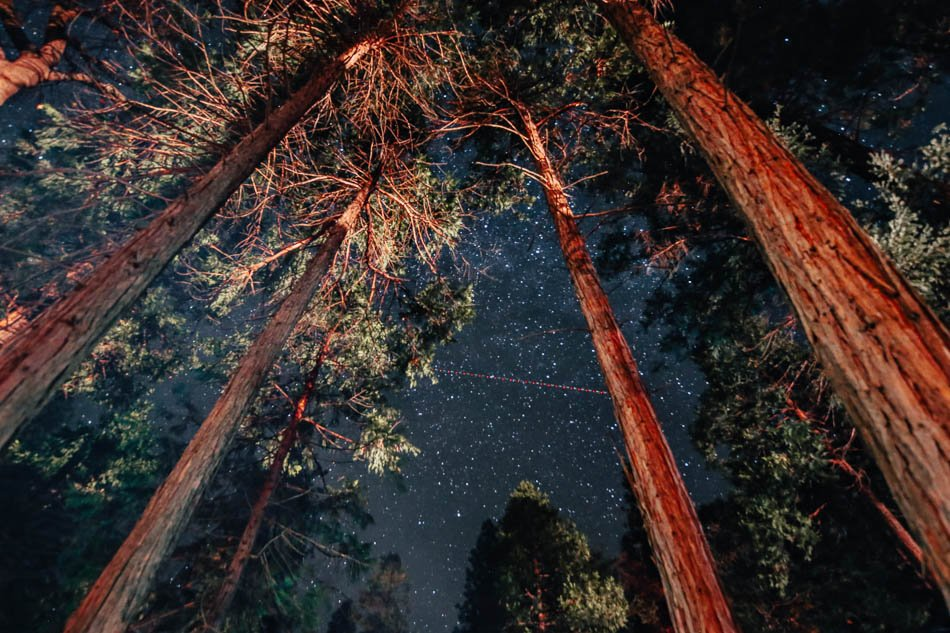Looking up at the stars under and in between the trees at Yosemite National Park, CA