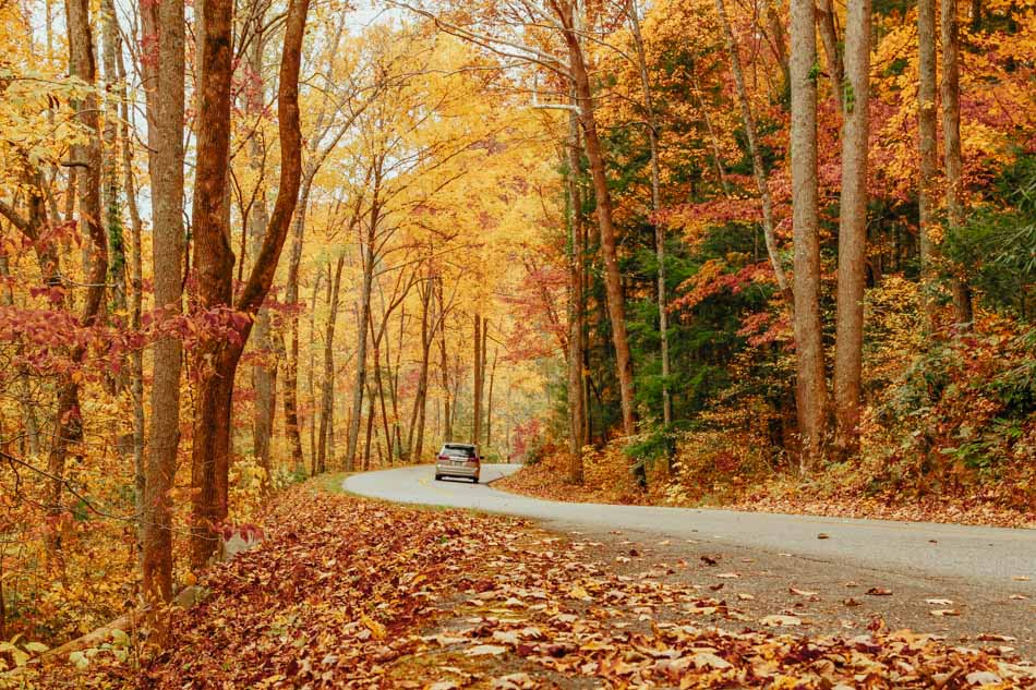 A car driving along Little River Road in fall in Great Smoky Mountains National Park