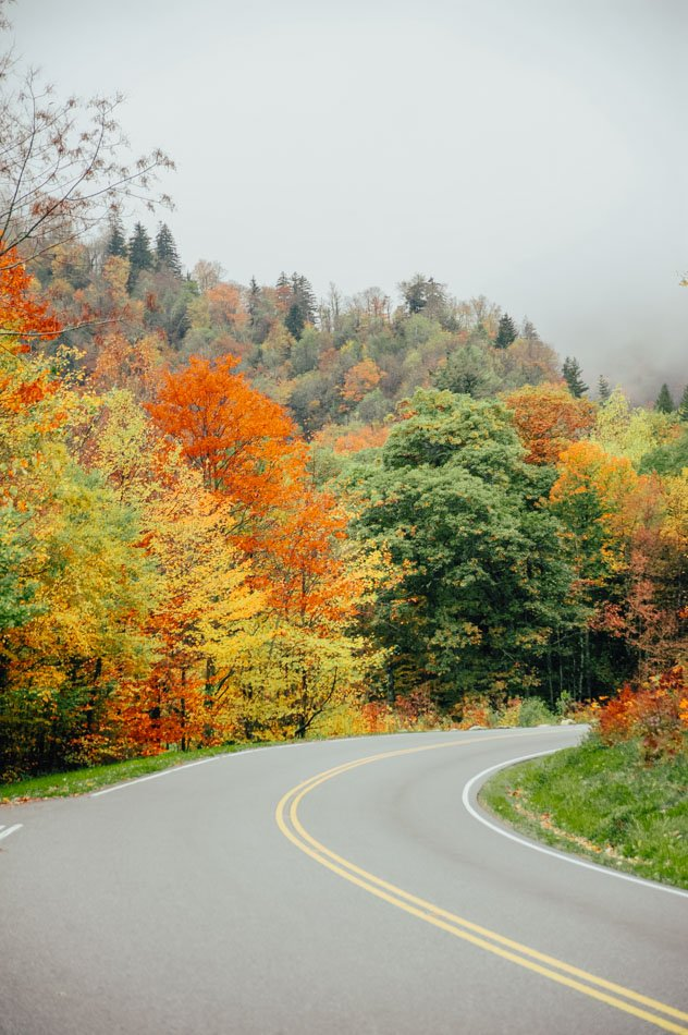 A slightly foggy road lined with fall colors in Great Smoky Mountains National Park